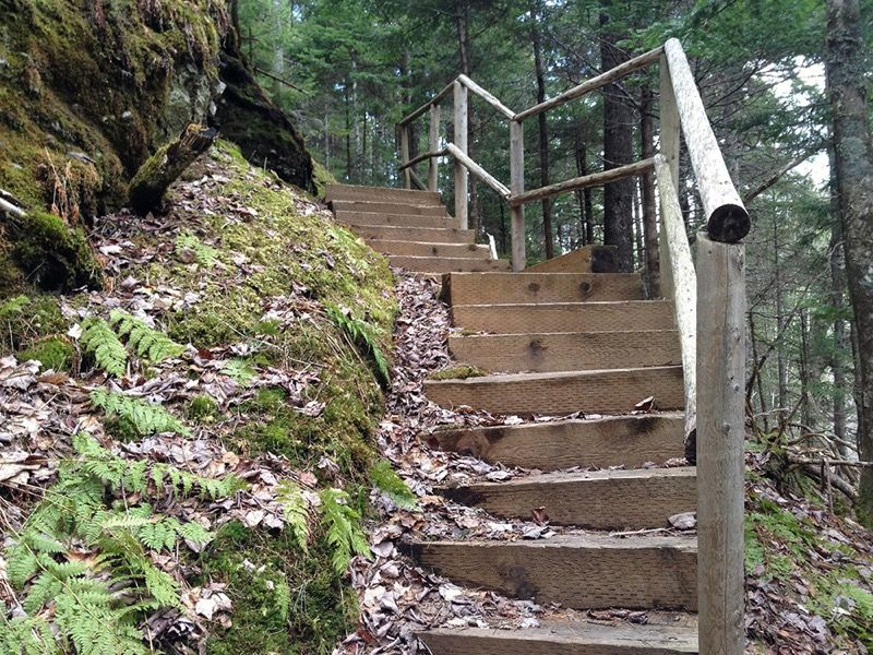 Stairs along trail