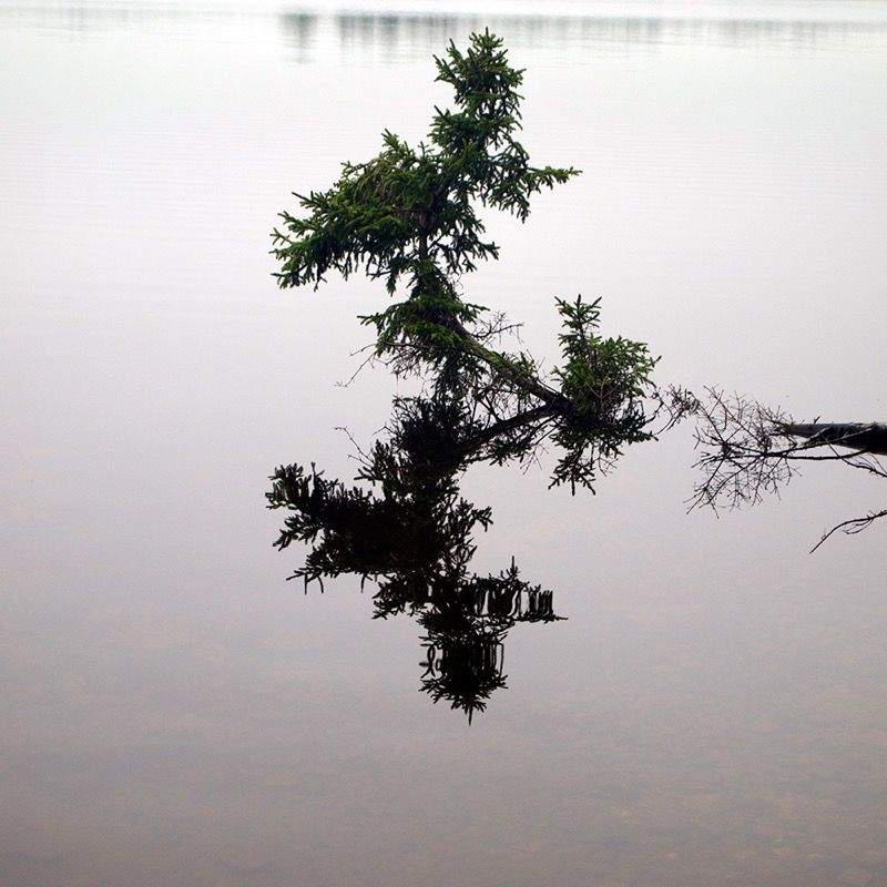 Tree over still water