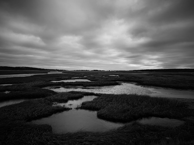 Salt Marsh walk