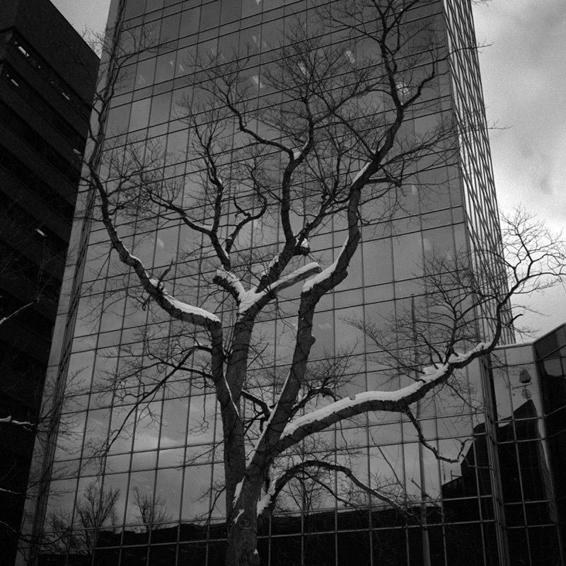 Bare tree and glass, Halifax