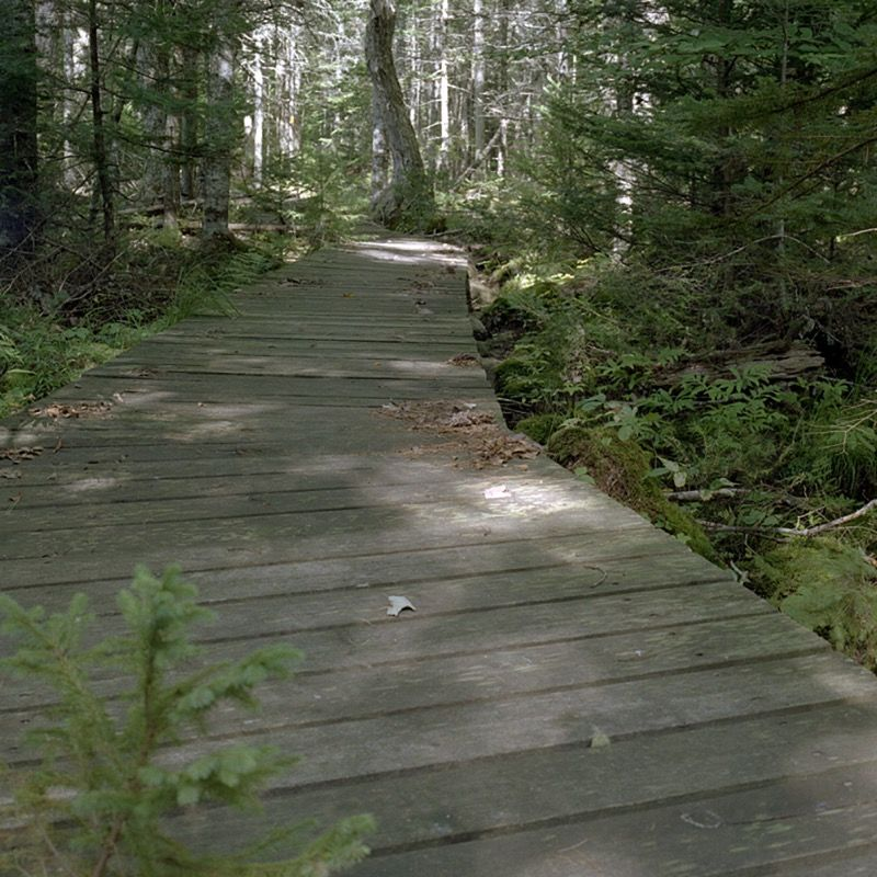 Boardwalk over Torment Brook