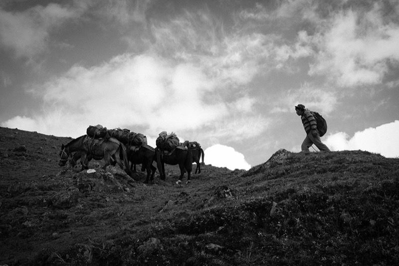 Porter and donkeys, Lares Trek