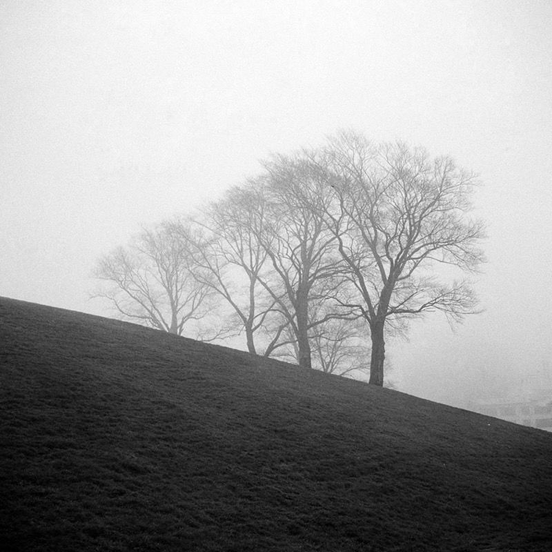 Trees in fog, Citadel hill